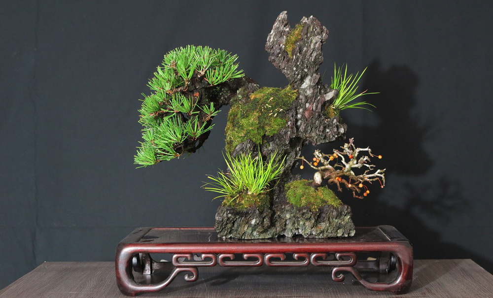 pin noir sur roche